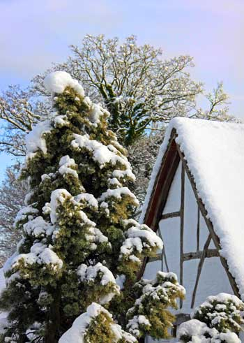 winter-trees-protection