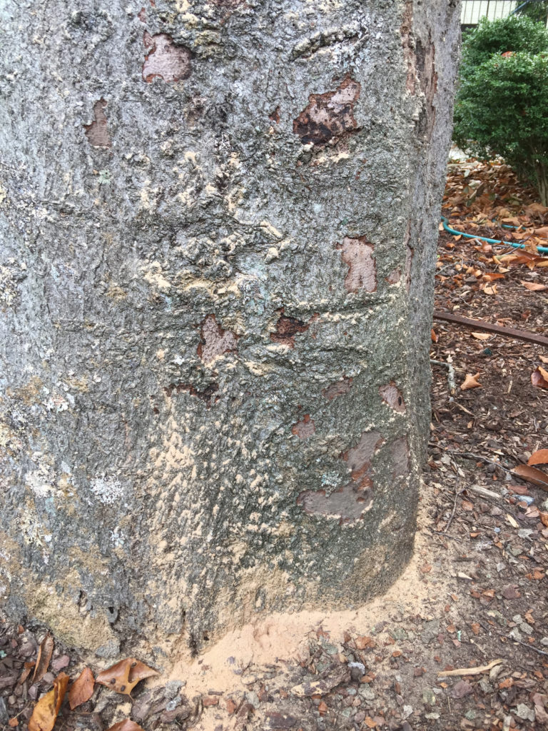 Wood boring insects and cankers on tree