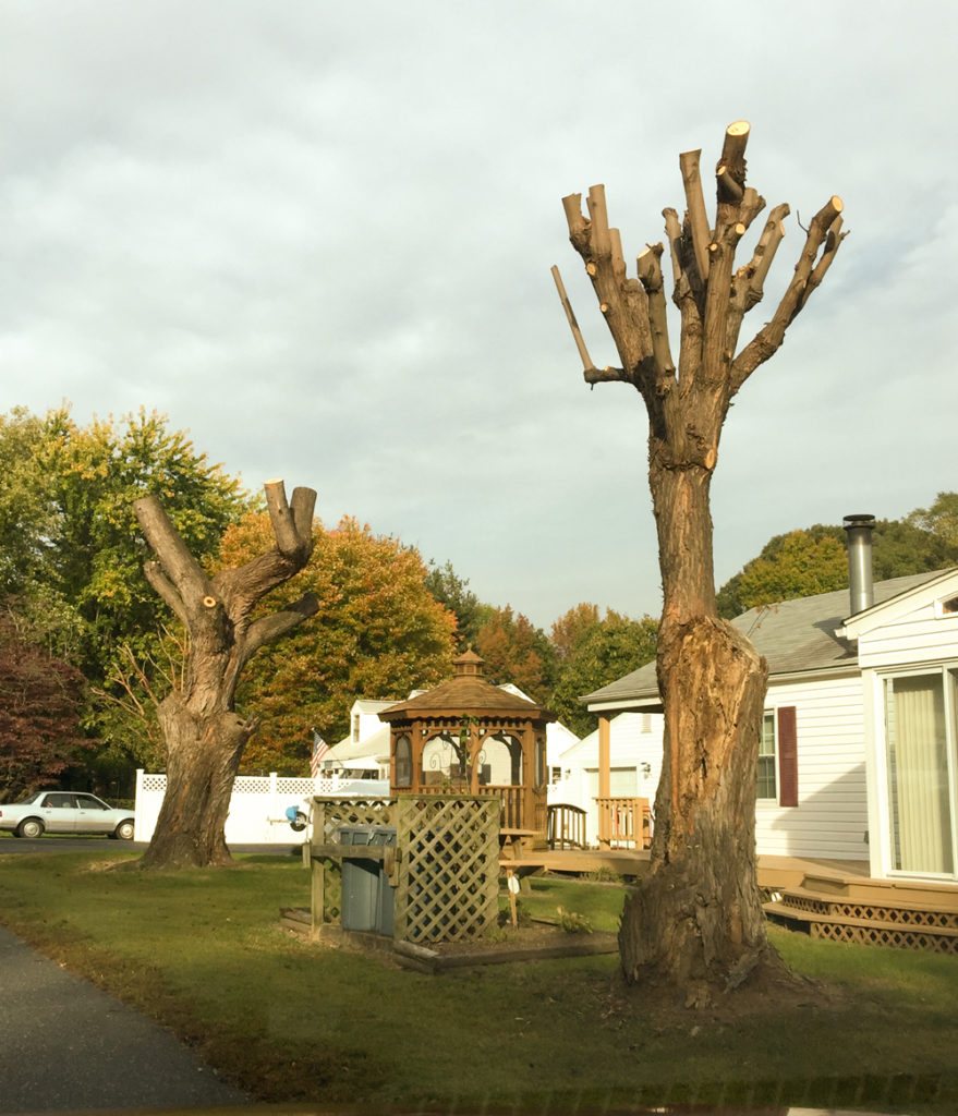 improperly pruned trees