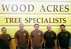 tree & shrub crew for tree removal MD, DC