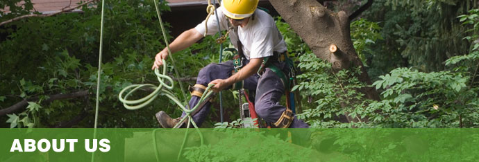 About Wood Acres Tree Specialists