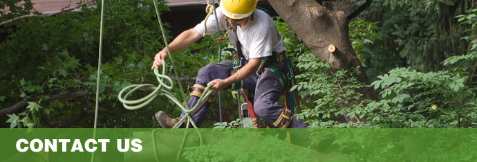 Contact for tree service in MD, DC