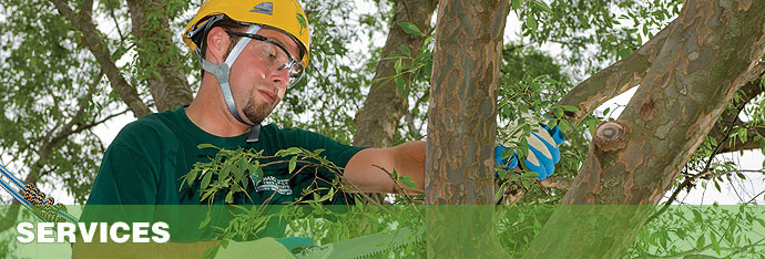 Disease and Pest Management Services for Trees and Shrubs