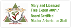 Maryland Tree Care Arborists - Tree Care Service