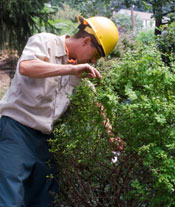 Tree Removal Washington DC - Tree Removal in Maryland MD