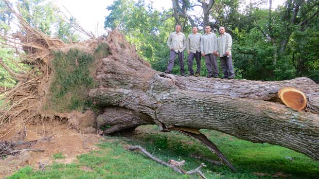 tree removal Maryland DC
