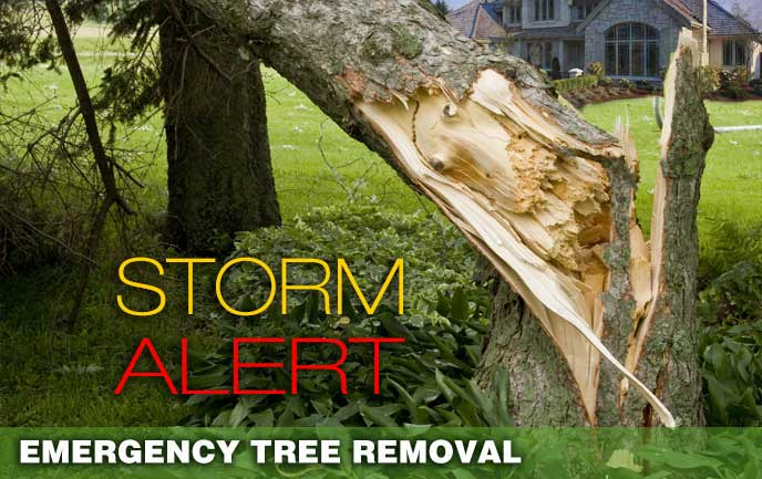 Maryland Dc Licensed Tree Service Tree Removal Shrub Care