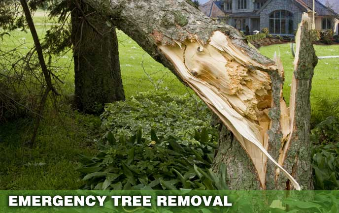 Emergency Tree Removal, storm damage to trees