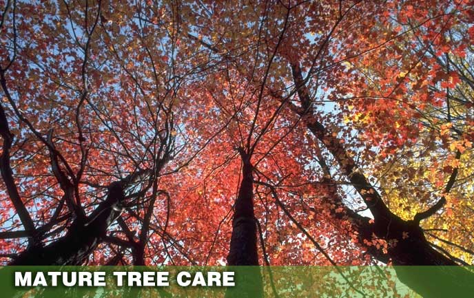 Tree Service for Old Trees Maryland DC
