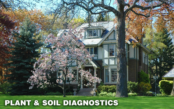 Tree and Shrub and Soil Diagnostics for Maryland DC