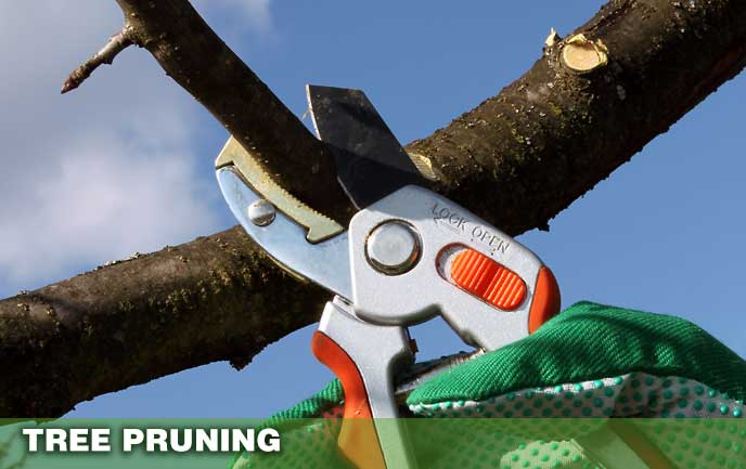 Tree Pruning Maryland DC