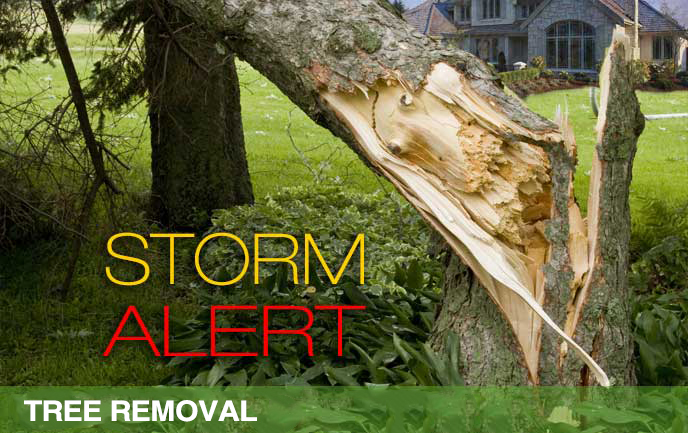 Storm Tree Removal, storm damage to trees