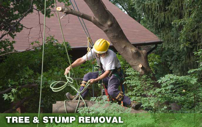 Tree Removal and Stump Removal Maryland DC