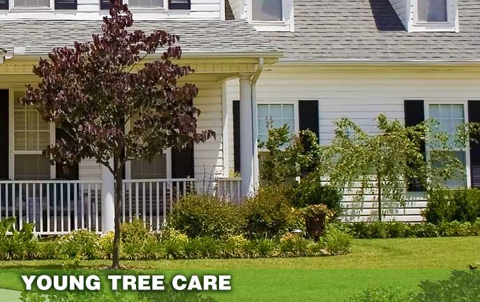 Tree Service for young and new trees Maryland DC