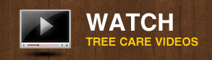 maryland dc tree care videos